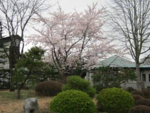 諏訪ノ森会5月.JPG