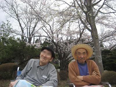 kinosato-sakura02.jpg